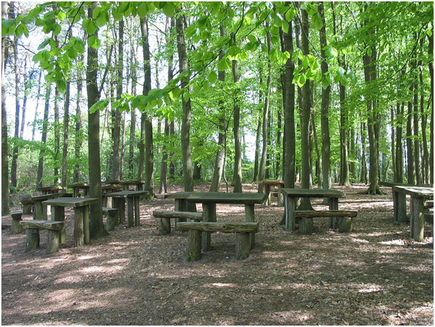 How to set up a forest school