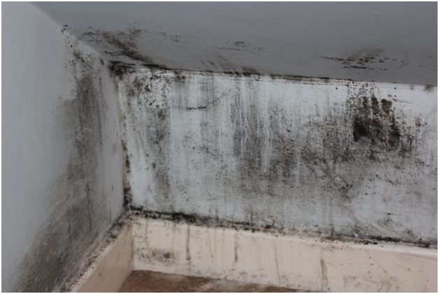 Simple Ways to Remove Mould and Mildew