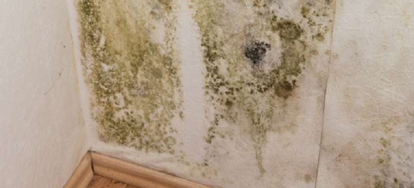 5 Mold and Mildew Prevention Tips for Homeowners