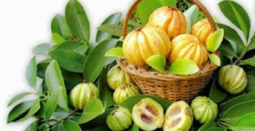 Are There Any Side Effects of Forskolin and Garcinia Cambogia?