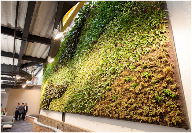 How to Look After a Living Wall