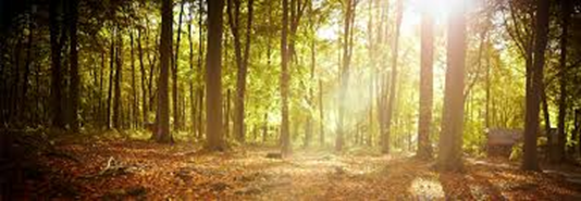 Popular Autumn Walks in the Forest of Dean